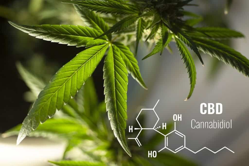 Healthy Effects of CBD Products on the Human Body 1